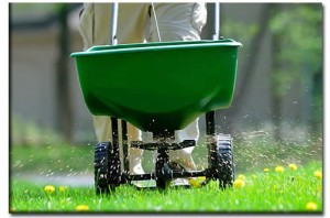 tampa_lawn_fertilization-300x198